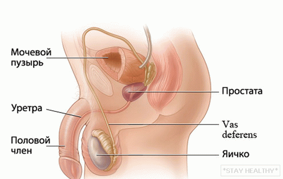 prostatito erekcija)